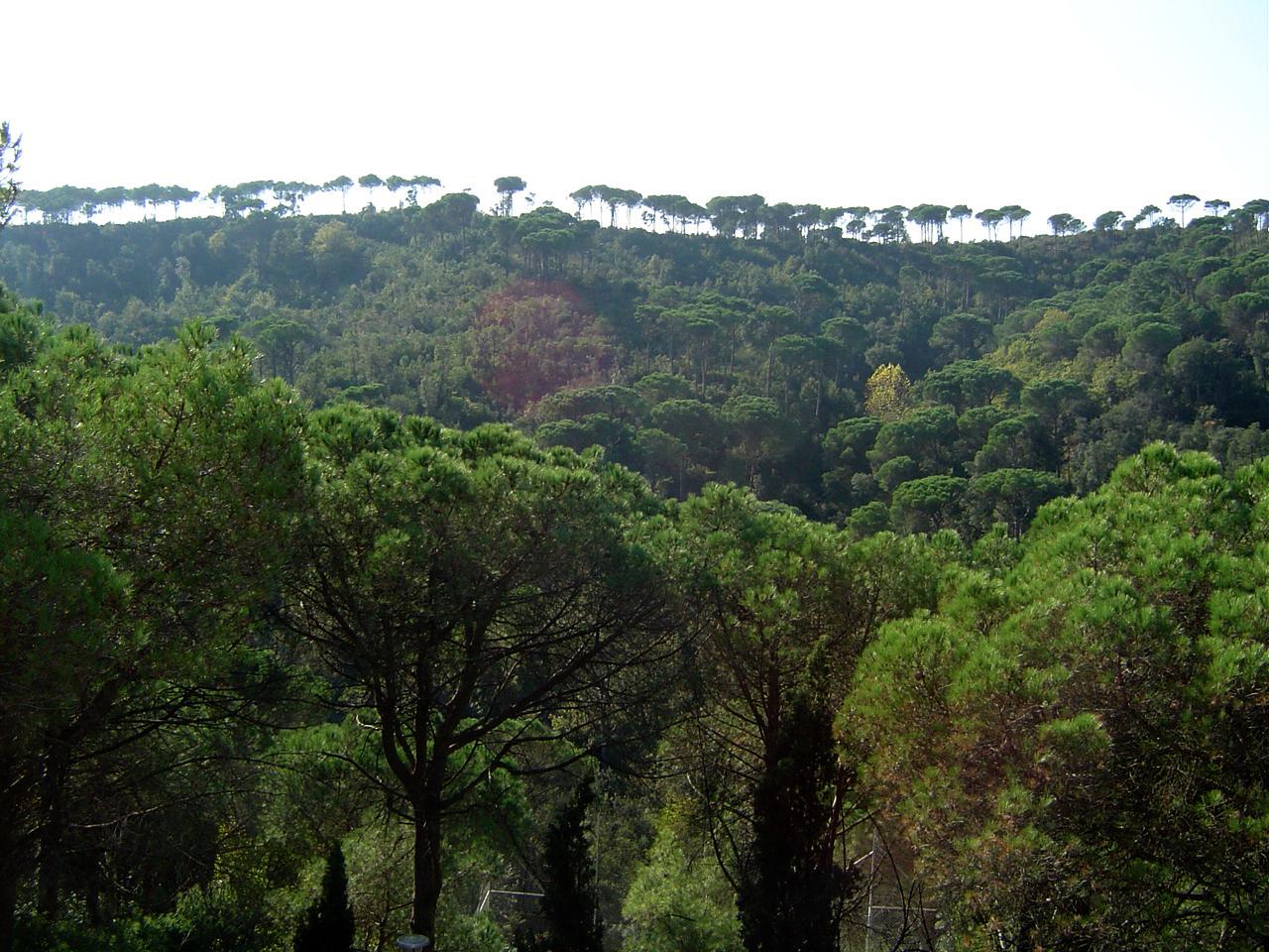 Casa de colonies el pinatar bosc bruixola br ixola activitats de lleure i col nies a catalunya - Casa de colonies els clapers ...