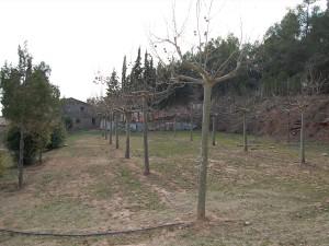 Casa-de-colonies-Castellnou-exteriors-Bruixola